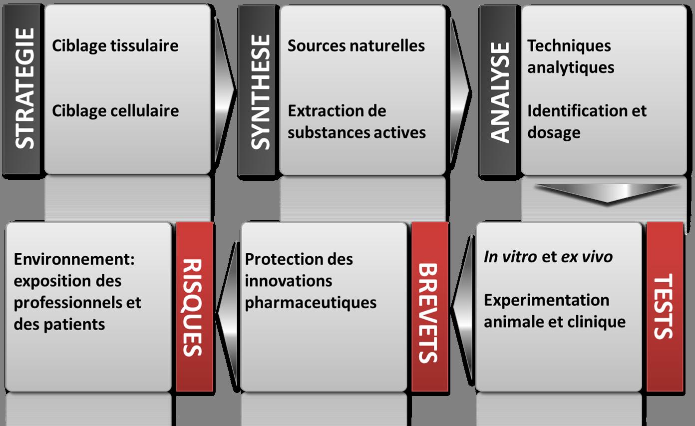 Schéma de la formation science du médicament.png