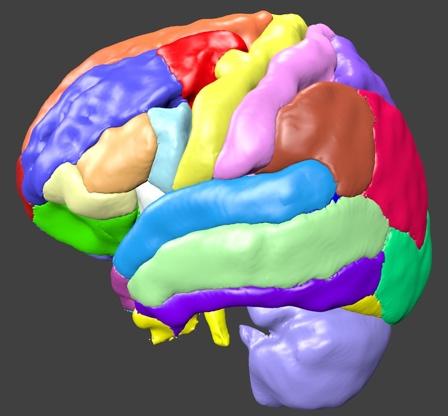 cortex01.jpg
