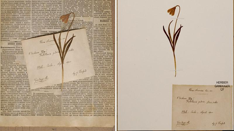 restaurationFritillariaAvantApres.jpg