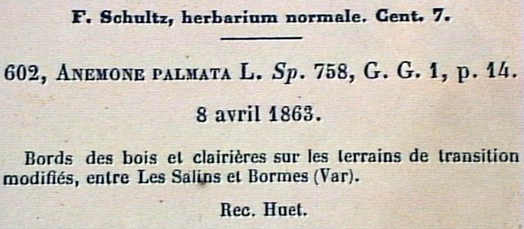 anemone-palmata-eti.JPG
