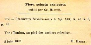 Delphinium-staphisagria-eti-150.JPG