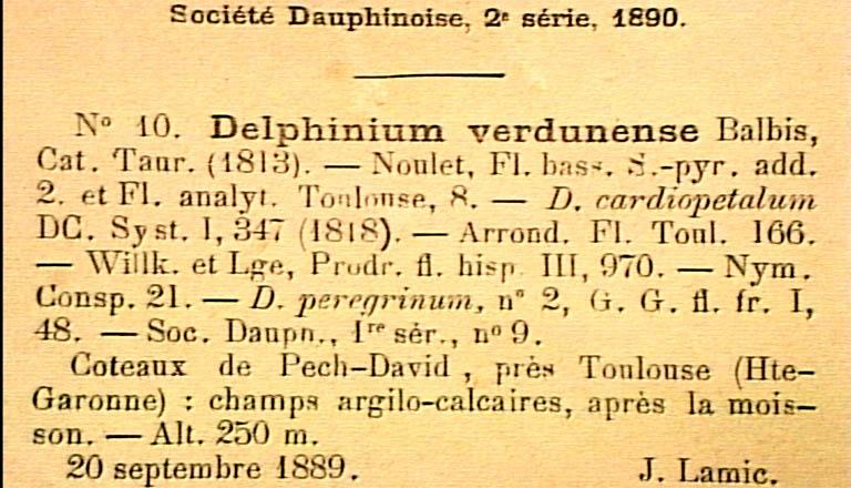 Delphinium-verdunense-eti.JPG