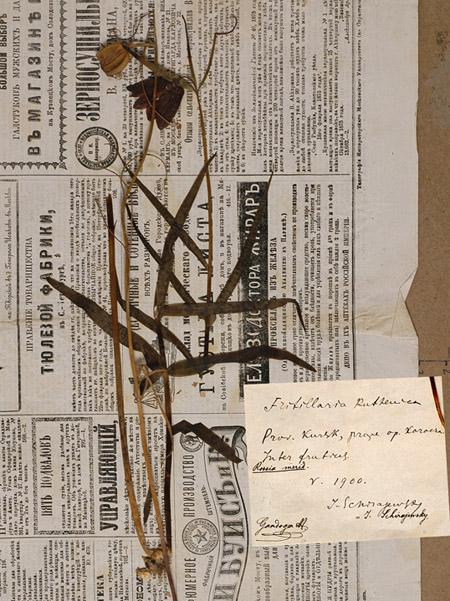 PartGandogerFritillariaruthenica_avant.jpg